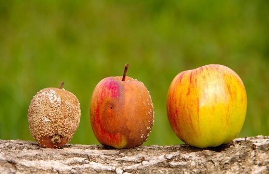 Do you have a bad apple in your team?