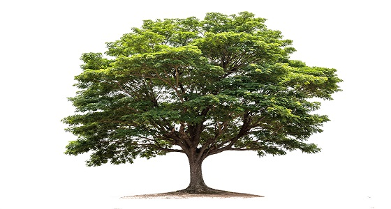 Plant the Friggin' Tree
